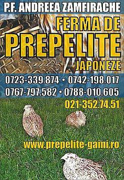 vindem-pui-de-prepelita-carne-si-oua-de-prepelita-10472