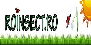 roinsect
